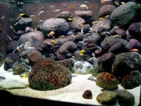 Aquascaping Ideas For African Cichlid Aquarium   THE AQUARIUM PET