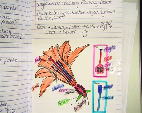 Flower Structure And Reproduction Worksheet Answers