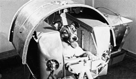 Dogs In Space dogs in space australian geographic