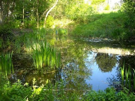 le jardin naturel un joli coin de verdure en plein