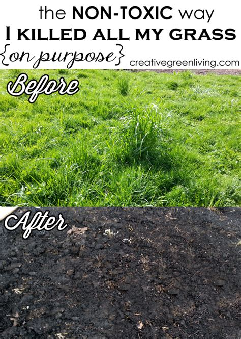 how to kill grass in flower beds the non toxic way i killed all my grass on purpose