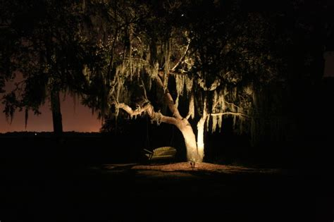 oak tree lighting landscape charleston by