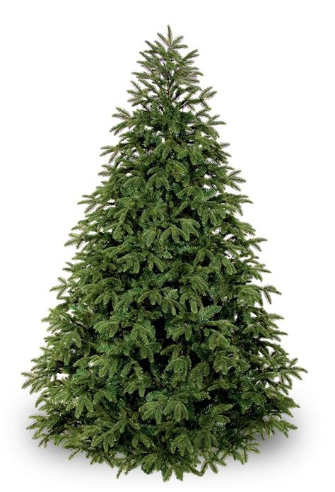 fraser fir unlit tree christmas lights etc