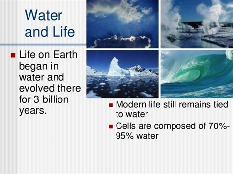 3 1 water 3 1 water ib biology hl 1 mrs peters fall ppt download