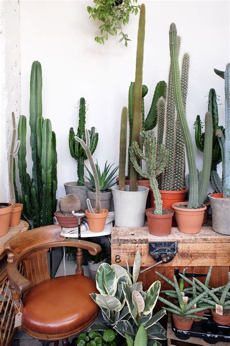 how to grow a plant in my room 1217 best endless succulent ideas images on succulents succulent ideas and landscaping