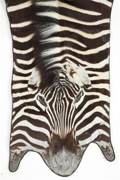 zebra print rug with pink trim rug zebra hide backed with leather trim at 1stdibs