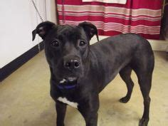richland county pound don t shop adopt on