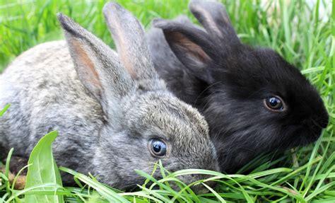 list   cute bunny names   fuzzball