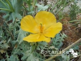 mediterranea fiori fiori spontanei