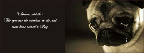 quotes about pugs pug quotes quotesgram