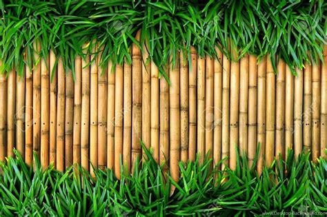 Lukisan Kaligrafi Bambu Yellow Green 1920x1200px Bamboo Backgrounds Hd Desktop Background