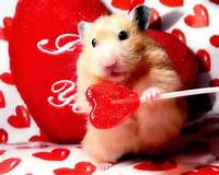 Cute Valentines Day Funny Animals