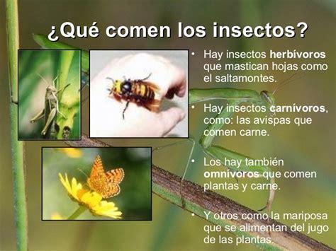que comen las hadas que comen los animales varinia los insectos