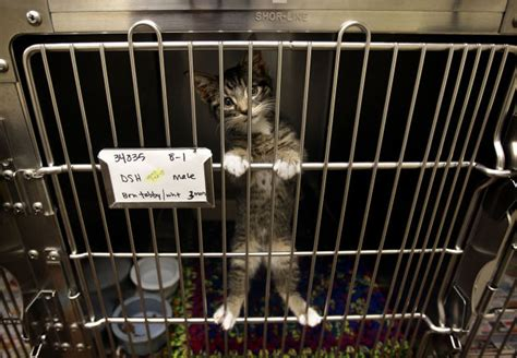 shelters in utah dogs cats await adoption at s utah valley animal shelter