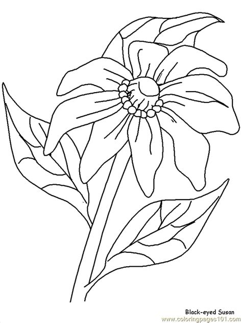 free realistic coloring pages of flowers realistic flowers coloring page free realistic flowers