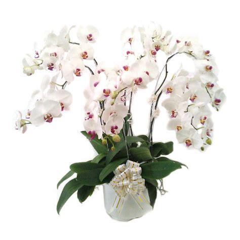 Pot Anggrek Bulan rangkaian anggrek bulan murah harga 1 juta toko bunga murah