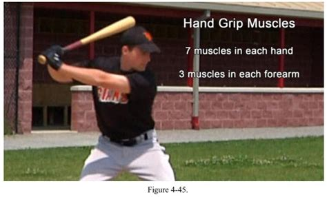 muscles used to swing a bat how to hit a baseball hand wrist action on the bat