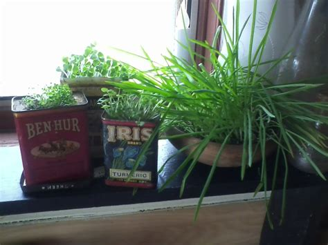 Window Sill Herbs Designs Window Sill Herb Garden For The Home