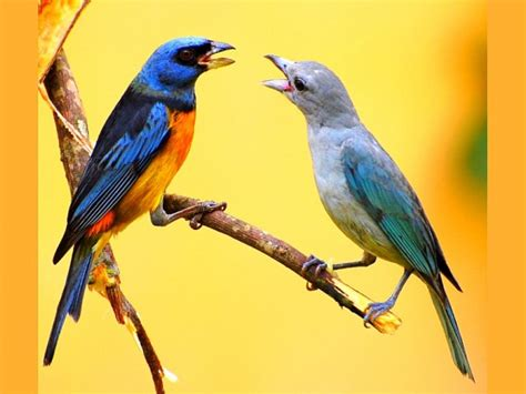 birds that eat insects in decline due to pesticide