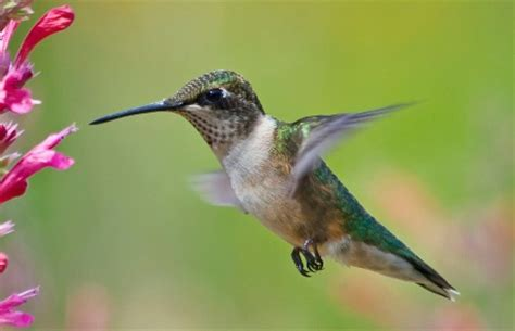 say hello to hummingbirds your great outdoors