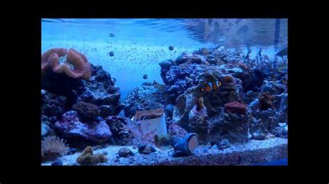ocean design aquarium reviews ocean design aquarium chicago il youtube