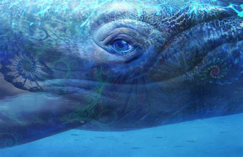 whale eye gallery 3 voyage to infinity with dolphins whales and dragons