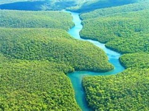 amazon hutan hutan amazon amerika dan hutan kalimantan indonesia