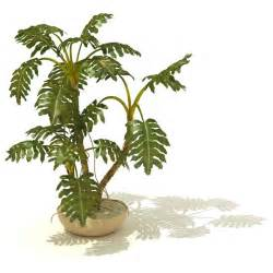 Tropical Indoor Garden - large potted plants for indoors k k club 2017