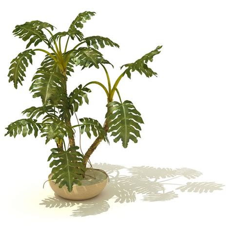 potted tropical plants potted tropical indoor plant 3d model cgtrader