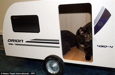 cat trailer it s a cat avan stray moggy gets own trailer after being