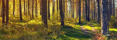 Green Forest Cabinetry Dealers