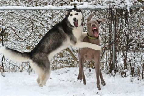 funny dogs daily picks  flicks