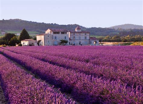 province france lavender fields provence france xcitefun net