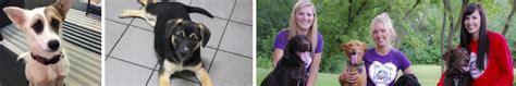 coco s rescue coco s rescue pet world