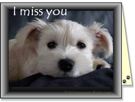 i miss you puppy free greeting ecards