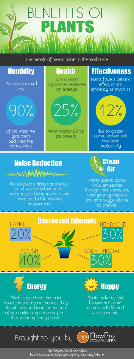 benefits of houseplants the health and work benefits of plants infographic