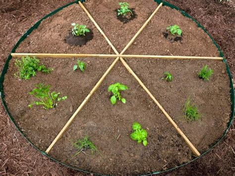 Pizza Garden by Grow Your Own Pizza Ingredients In Your Garden Hgtv