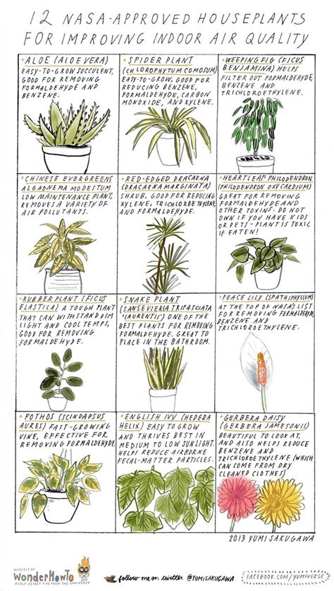 best plants for air quality 12 nasa approved houseplants for improving indoor air