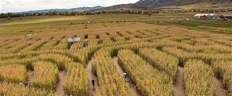 Botanical Gardens Corn Maze Masked Attacks Inside Denver Corn Maze Abc News U S Howldb