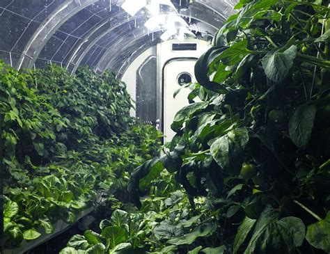 nasa designs inflatable greenhouse  sustainable farming