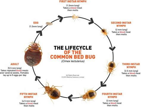 bed bugs stop pest  ny pest control call