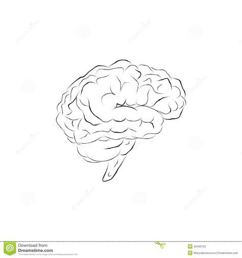 doodle brain doodle brain stock vector image 42433125