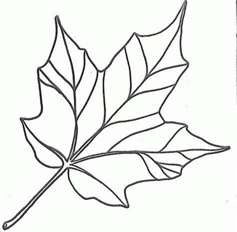 leaf pattern with lines drawn maple leaf traceable pencil and in color drawn