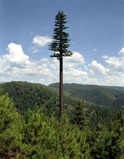 ls that look like trees rogue cell phone towers