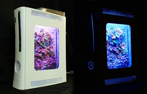 Five DIY fish and coral aquariums that we particularly