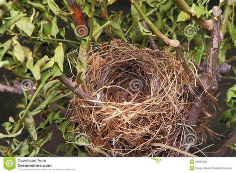 Schöne Nägel Bilder by Nisten Sch 246 Ne Nat 252 Rliche Leere V 246 Gel In Einem Baum