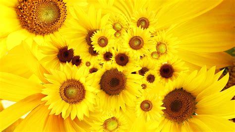 wallpaper flower high resolution high res flower backgrounds wallpaper 1920x1080 23168