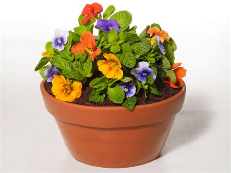 Best Place To Buy Flower Pots How To Make A Flowerpot Cake