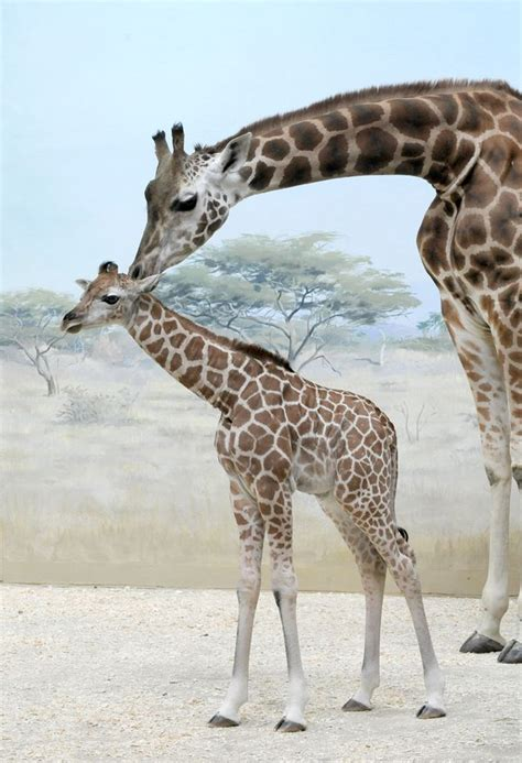 giraffe and birdie save the woodlands books wildlife conservation society s bronx zoo just got six