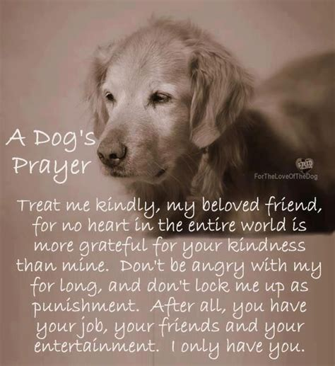 dogs prayer prayers and quotes of dogs quotesgram